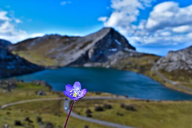Lago Enol, Covadonga, Asturias