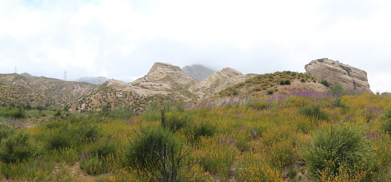 Blooming wildflowers and sandstone outcroppings from the PCT in Cajon Canyon