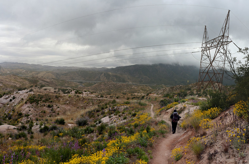 Superblooming wildflowers are abundant as we continue past some power lines in Cajon Canyon on the PCT