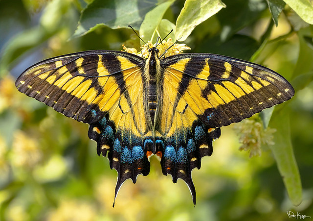 A yellow butterfly can symbolize change or transformation; also, like most butterfly symbology, they represent renewal and rebirth.