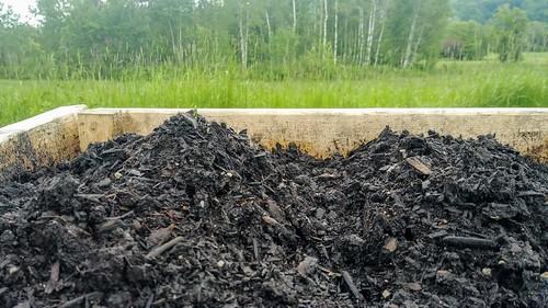 """Asparagus growing through 6"""" soil"""