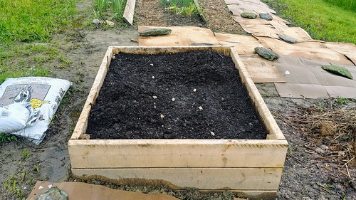 The Asparagus Bed