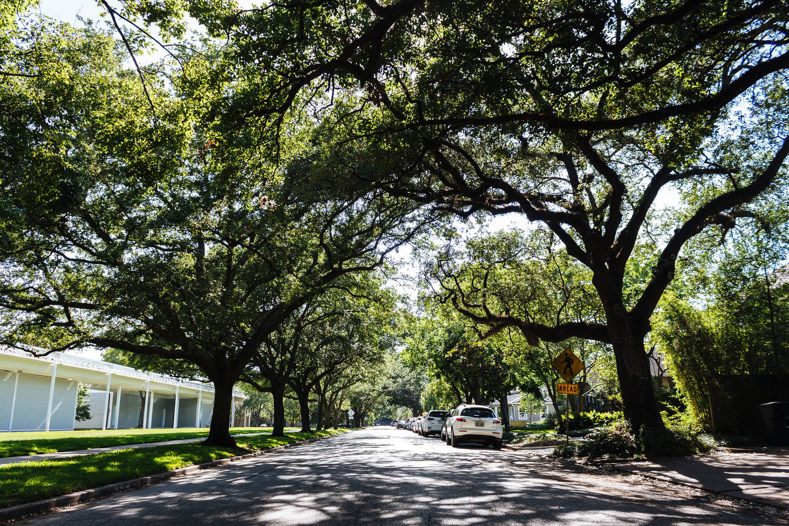 Residential street with large oak trees creating a canopy overhead