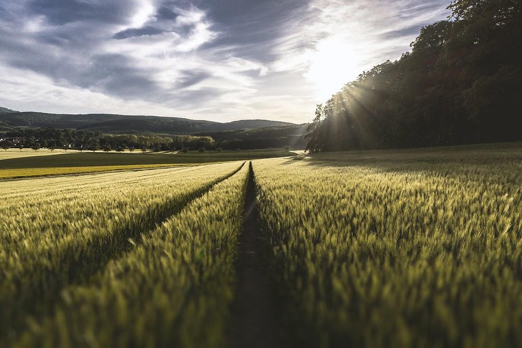 農地。圖片來源:Pixabay
