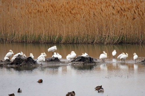 EAAF142 Hwaseong Wetlands