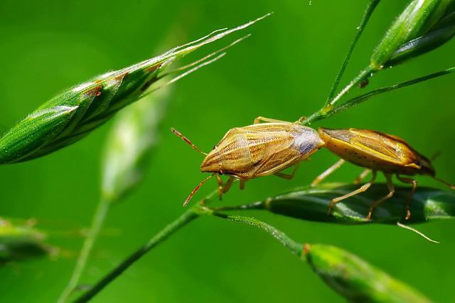 Fucking Beetle oder auch Käferporn