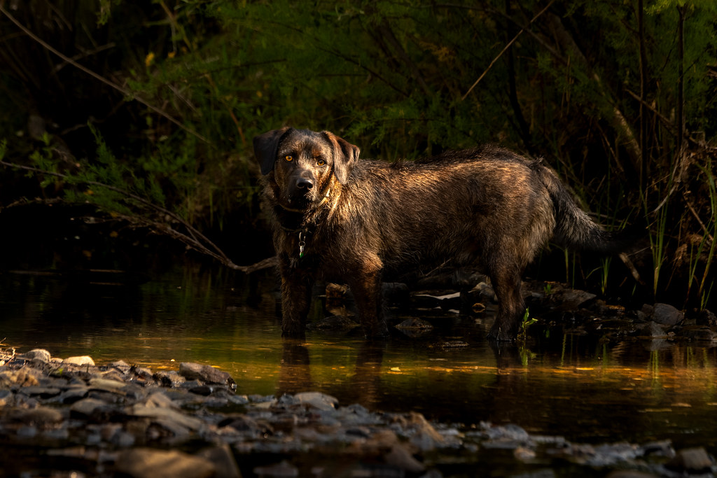 Wally Catching Sunlight Through The River Bank Trees