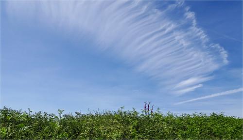 Look to the Skies