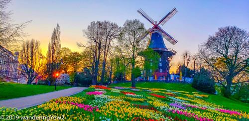 bremen bremengermany deutschland germany evening flower sunset tulip windmill