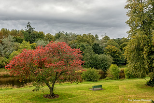 The Red Tree-18-0889 | by Dave_Johnstone