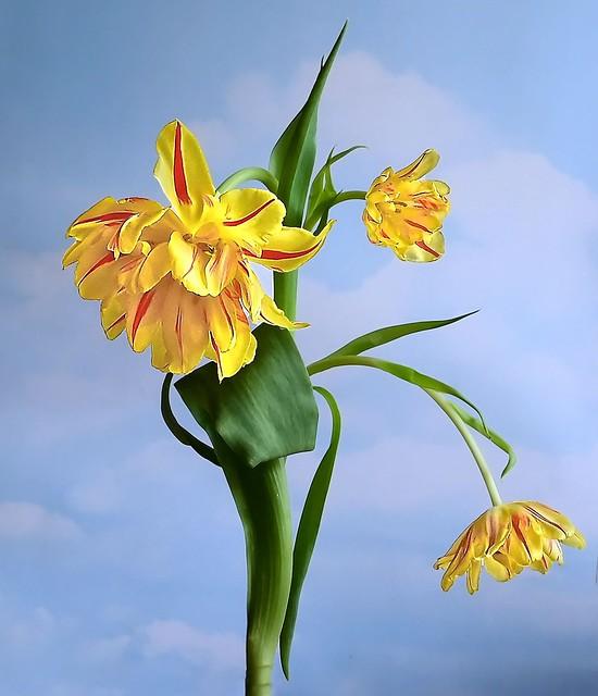 Tulip Extravaganza (1 of 2)