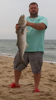 Roger Fawley recently caught this nice bluefish in the Ocean City surf