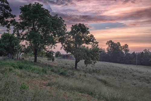 Trees at Dawn | by Vincent1825