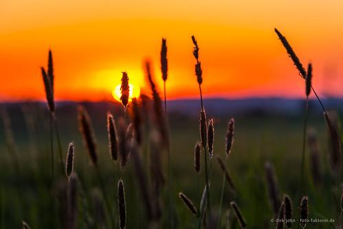 sunset sonnenuntergang posseck thuringia thüringen deutschland germany field nature natur getreide gassenreuth
