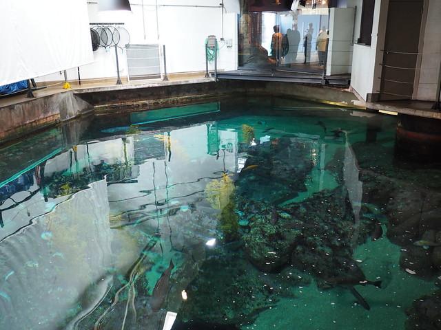 Reef tanks top