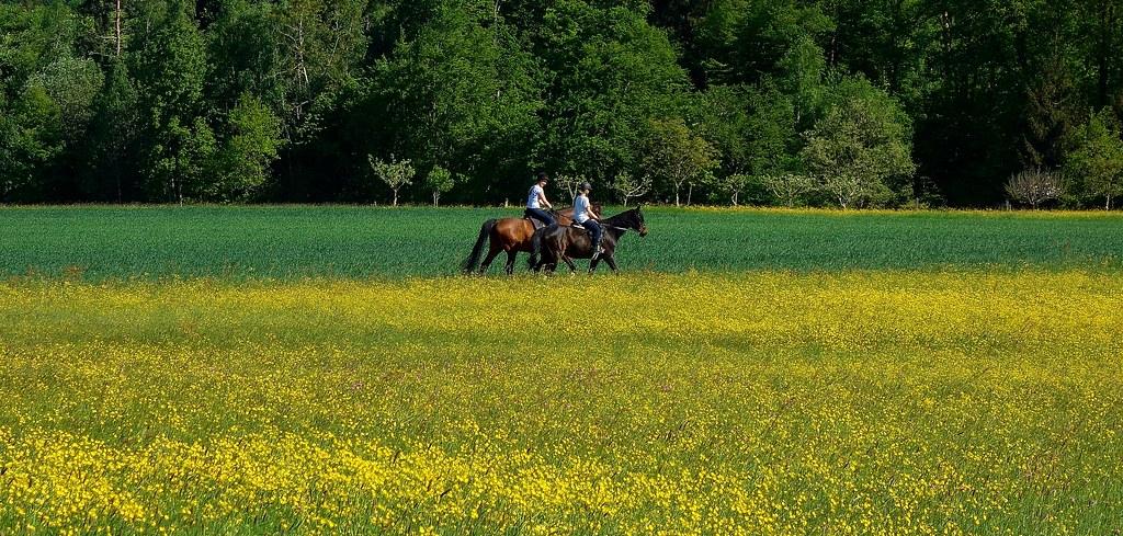 Germany, Warmbronn,  Auf dem Rücken der Pferde... 76684/ 11555