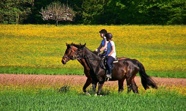 Germany, Warmbronn,  Auf dem Rücken der Pferde... 76683/11554