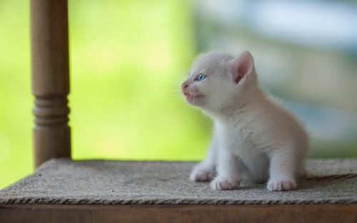 kitty kittens kittysuperstar catsdogs cats animals animalplanet nikond90 sigma15028macro croatia zagorje hrvatska klenovnik