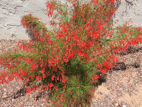 phoenix arizona bushes flowers brightcolors texture cmwd htt iphone