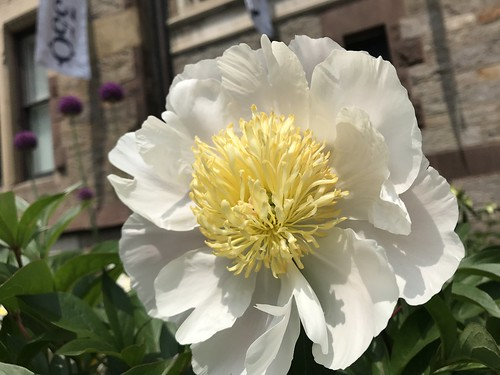 June 1, 2019 - 12:20pm - Spring Garden