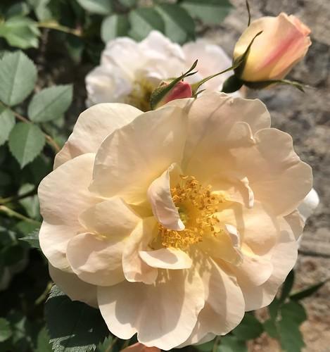 June 1, 2019 - 12:23pm - Spring Garden