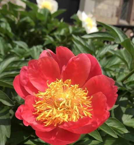 June 1, 2019 - 12:22pm - Spring Garden