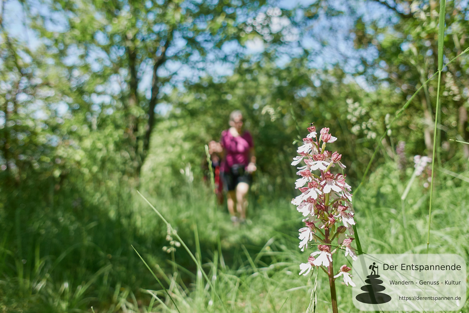 Durch das Naturschutzgebiet am Wissberg