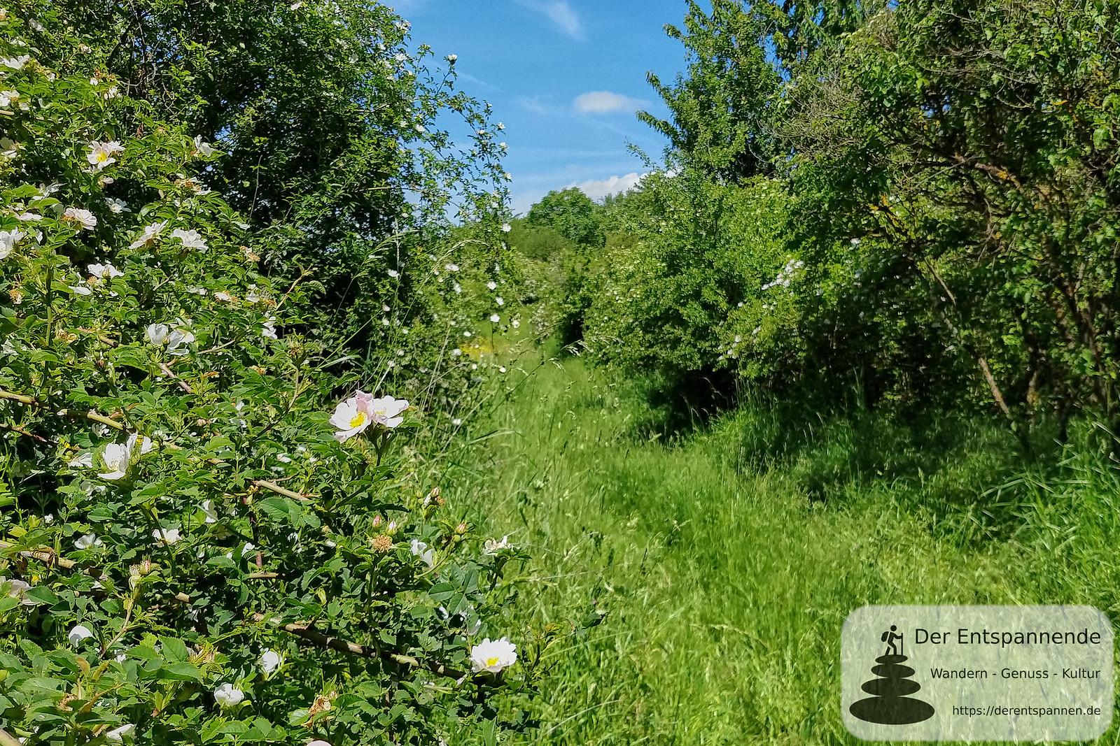 Via Vinea durch das Naturschutzgebiet am Wissberg