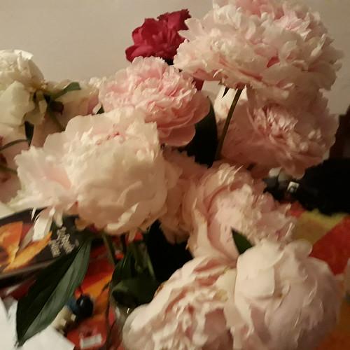 Bouquet de pivoines du jardin