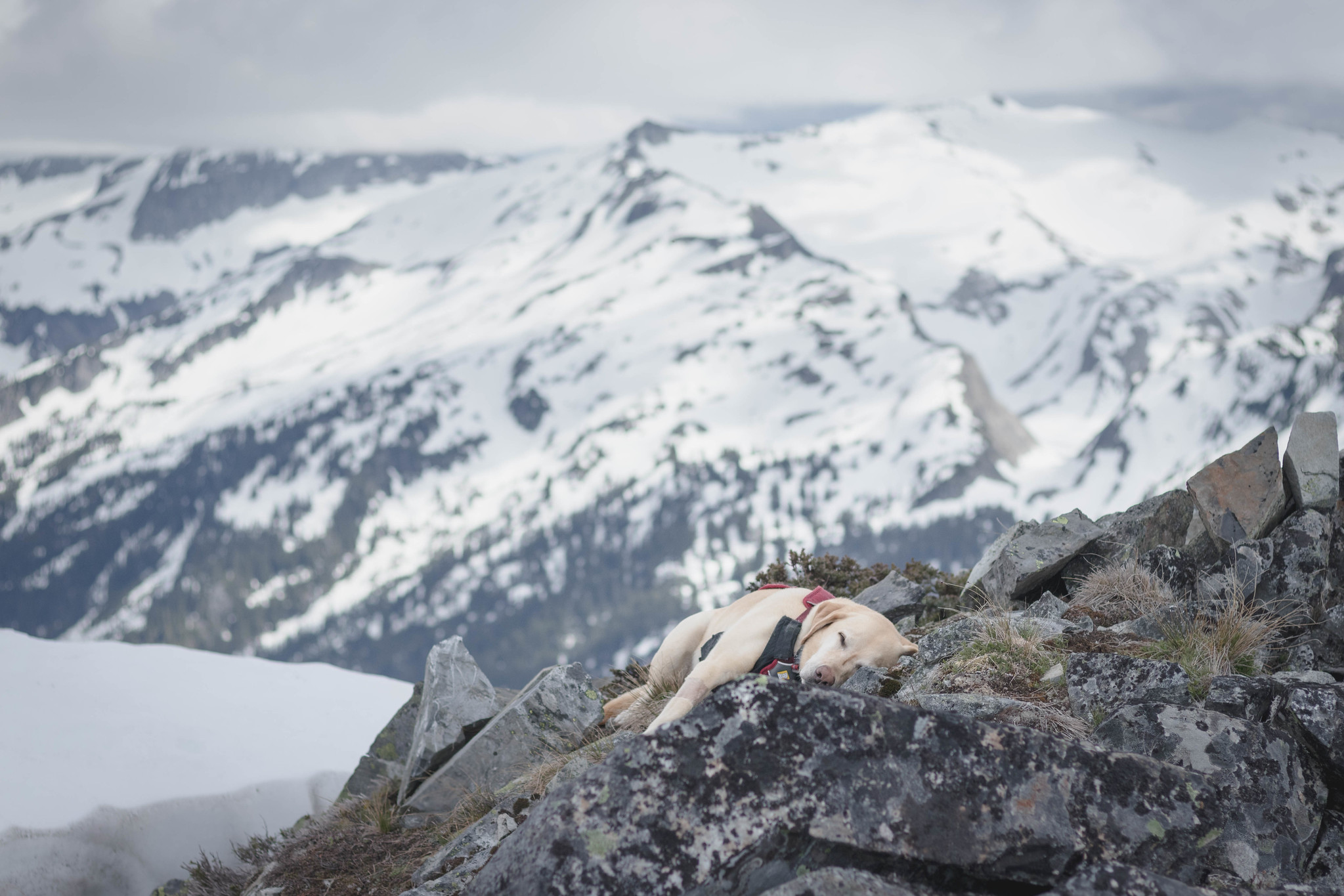 Summit dogs on Bald Eagle Peak