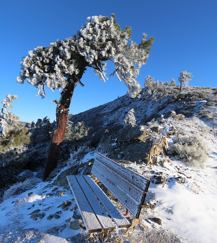 Wooden Bench and Pine Tree covered in rime ice on the PCT near Inspiration Point