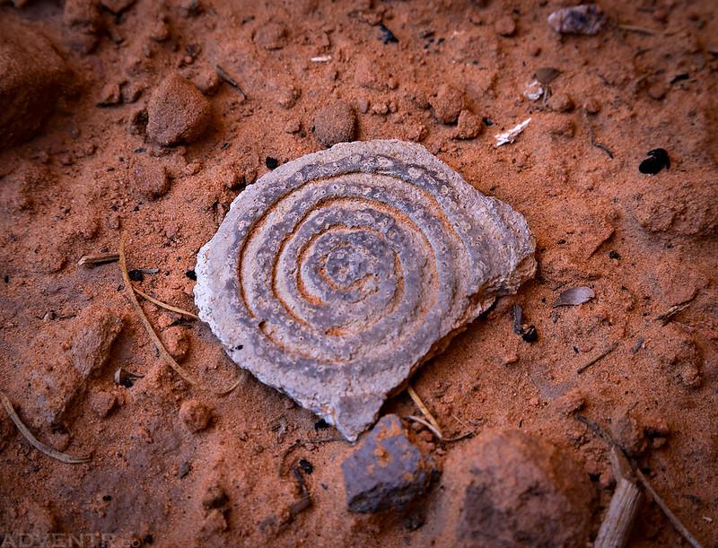 Spiral Sherd