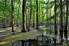 Along Life Journeys, I Came Across Some Waters (Congaree National Park)