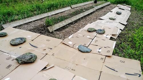 Usign rocks to hold down garden cardboard walkways