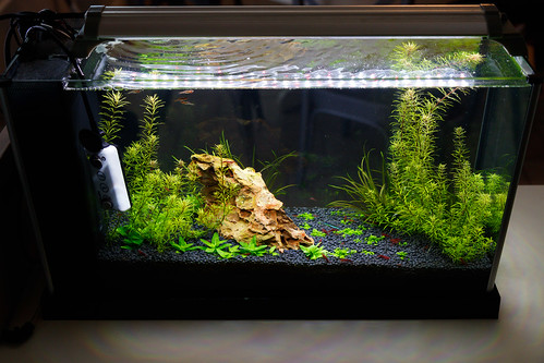 crystal clear water in spec v planted aquarium