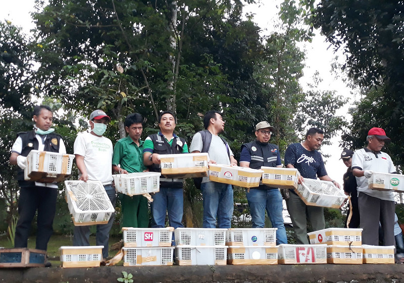 FLIGHT, West Java BKSDA and Cilegon Quarantine officials prepare to release the birds