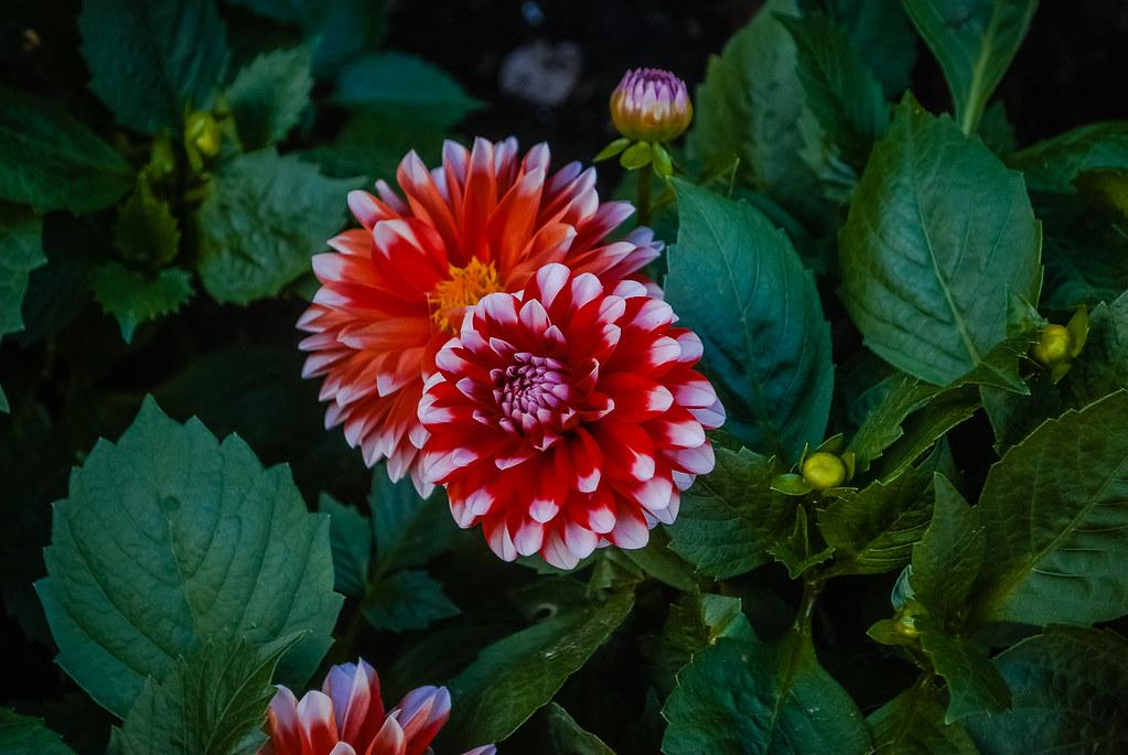 Great flowers ! 14:33:53 DSC_3210