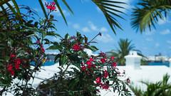 Bermuda Skyline