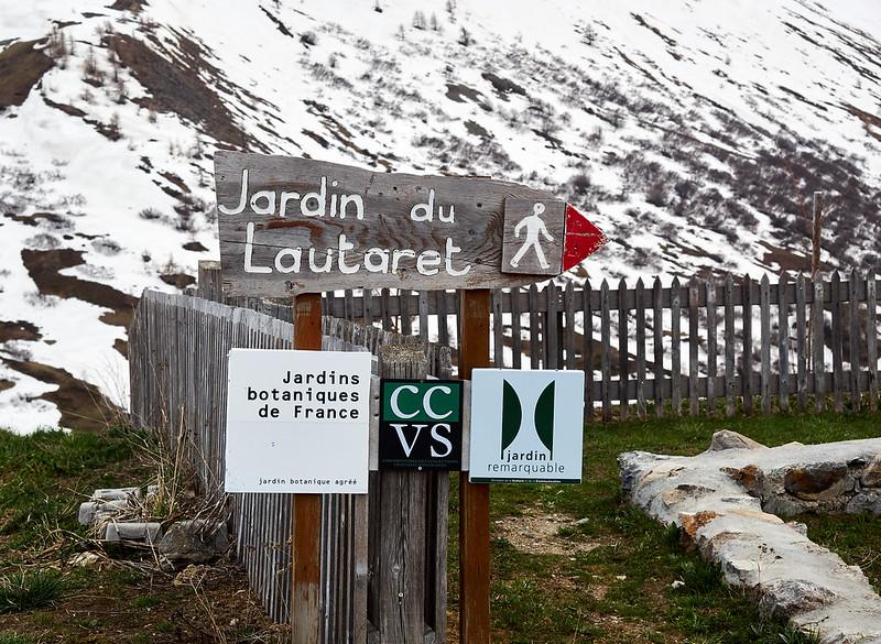 Jardin de Lautaret