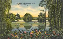 View along the Wicomico River, Salisbury, MD