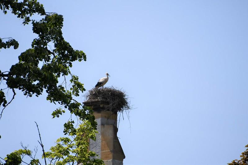Stork 04.06 (2)