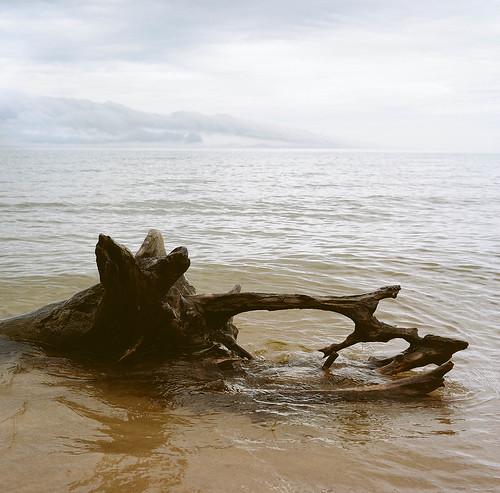 Lake Michigan has my heart   by sumacandmilkweed