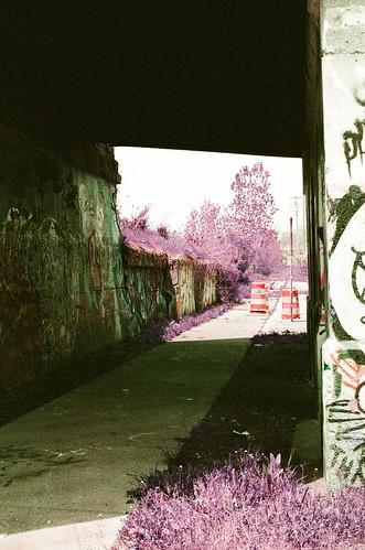 Detroit and metro on lomo purple   by sumacandmilkweed