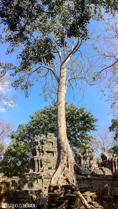 Cambodia - 0249-Pano
