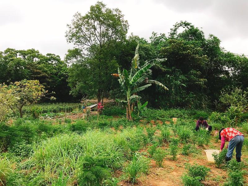 來自爛滄,在原干城五村旁栽種各種東南亞蔬菜的婆婆和她的田。圖片提供:麥浩斯