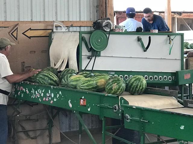 Watermelon on a machine