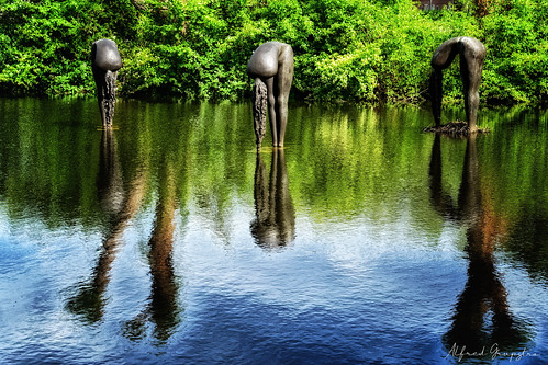 nature water river animal reflection outdoors lake pond wildlife tree landscape greencolor environment nopeople forest animalsinthewild grass tranquilscene scenics day naïaden oudewater