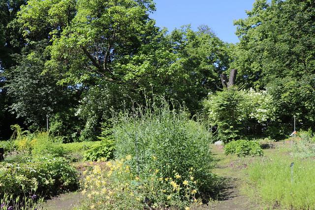 Warsaw University Botanical Garden, Poland