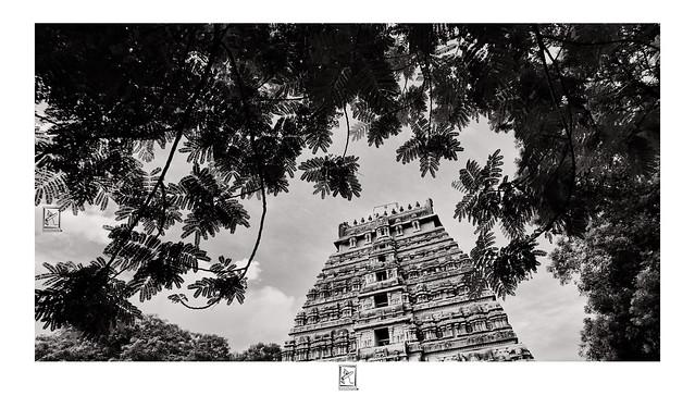 Gopuram between foliage