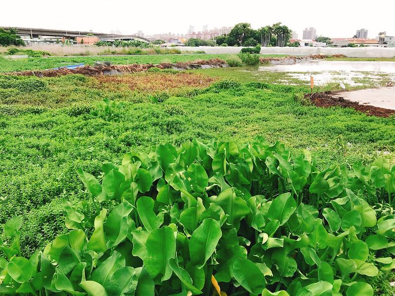 靈活適應台灣生活的新住民,成為種苗業生力軍,東南亞的特殊蔬果正等著被在地發現。圖片提供:麥浩斯